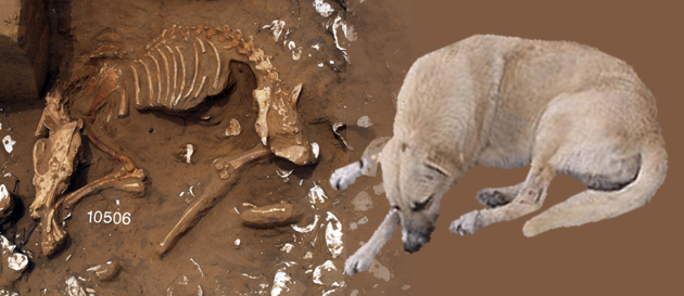 image of dog skeleton contrasted with dog image